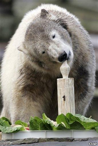 Knut with cake