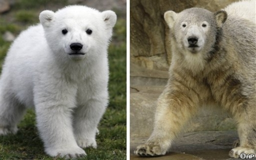 Knut then and now