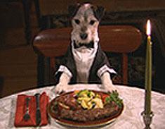 Dog's Breakfast