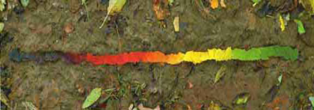Andy Goldsworthy - Leaves