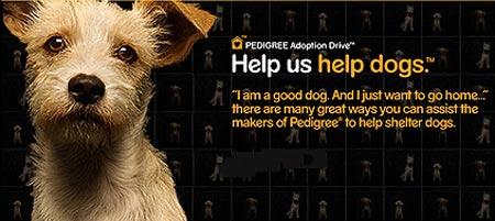 Pedigree Shelter Adoption Program
