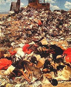 Landfill Animals