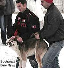Stray Dog Bucharest