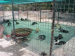 Stray Dogs Romania