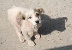 Stray Dog Romania