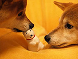 Shiba Inus and Toy